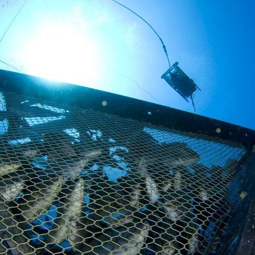 pisciculture-rov